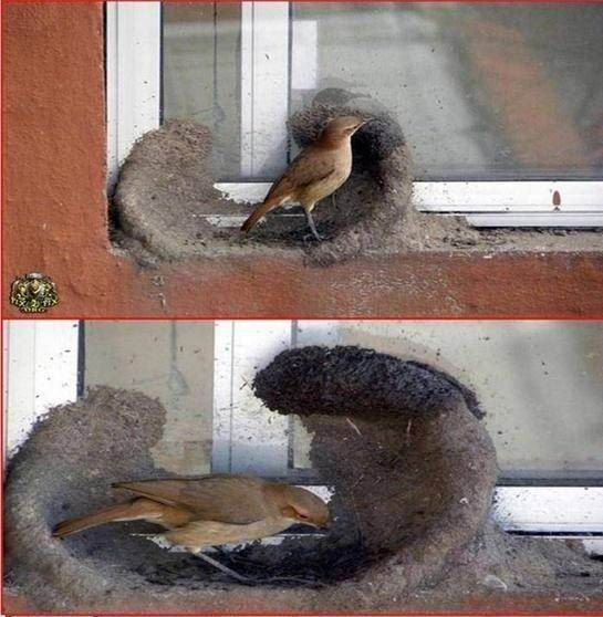 oiseau-nid-01