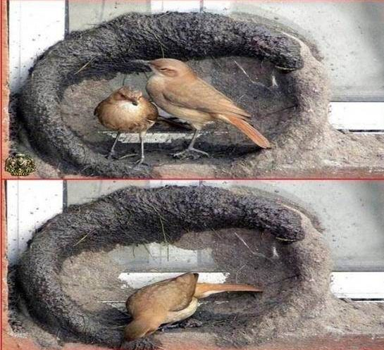 oiseau-nid-03
