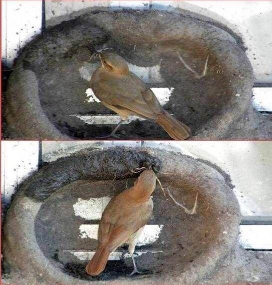 oiseau-nid-04