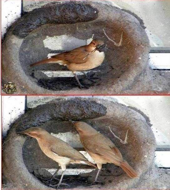 oiseau-nid-05
