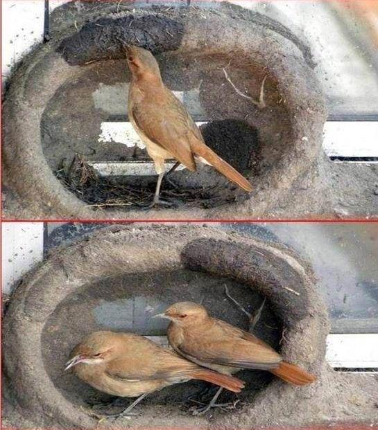 oiseau-nid-06