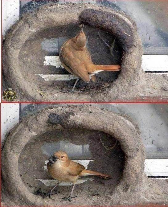 oiseau-nid-07