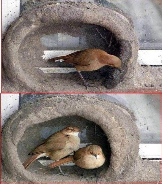 oiseau-nid-08