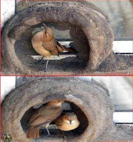 oiseau-nid-09
