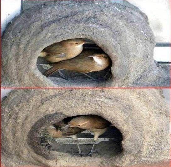 oiseau-nid-10
