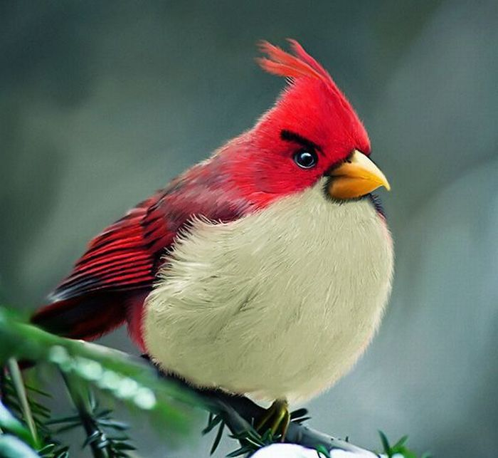 oiseaux-angry-birds-vrai-01