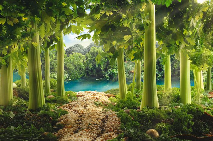 paysages-nourriture-07