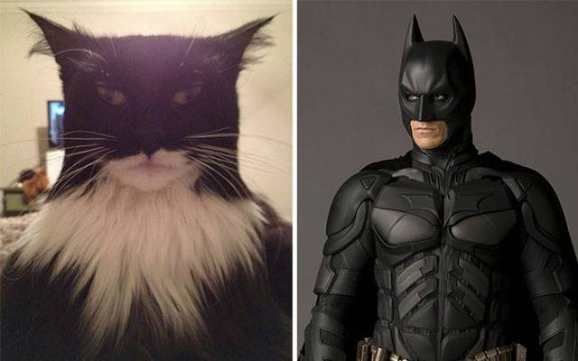 sosies-personnages-fictifs-batman-chat