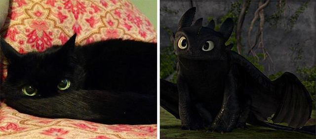 sosies-personnages-fictifs-dragon-toothless-chat