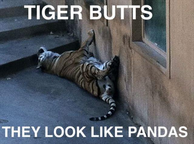 cul-tigres-panda