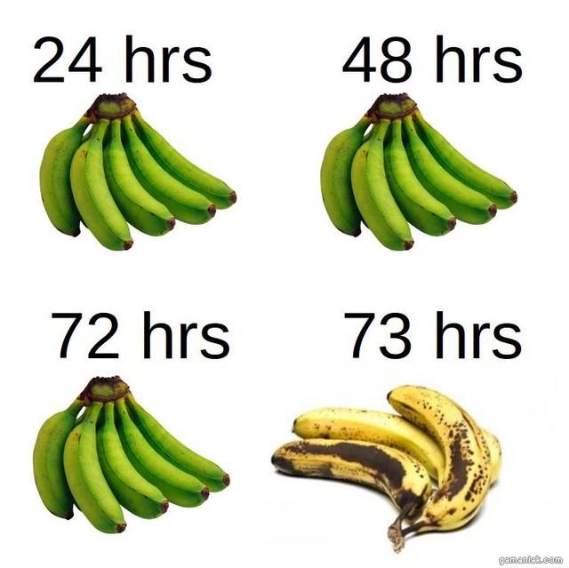 duree-vie-des-bananes