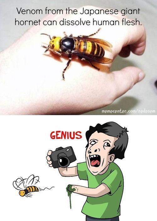 une-abeille-qui-peut-faire-fondre-peau