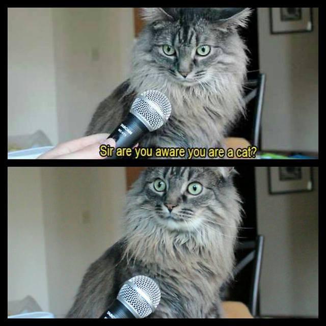 vous-etes-courant-que-vous-etes-chat