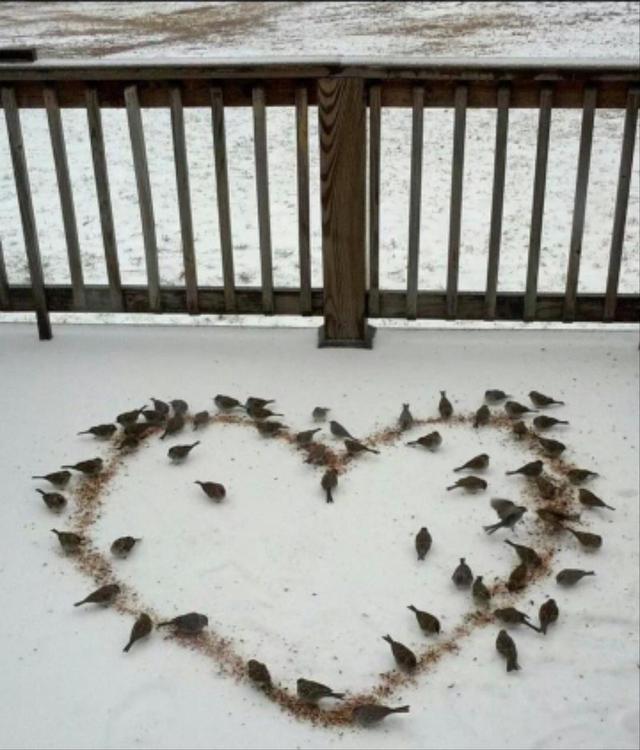 oiseaux-graines-coeur