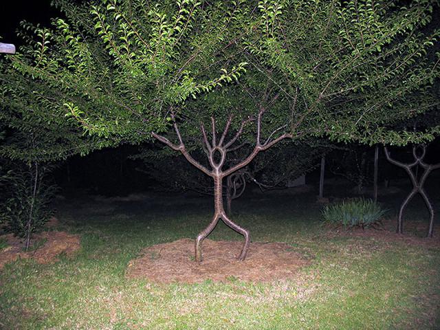 arbre-humain