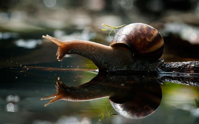 bebe-mante-religieuse-sur-escargot