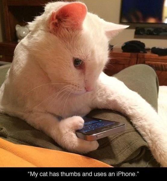 mon-chat-des-pouces-utilise-telephone