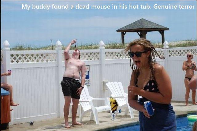 souris-morte-dans-piscine