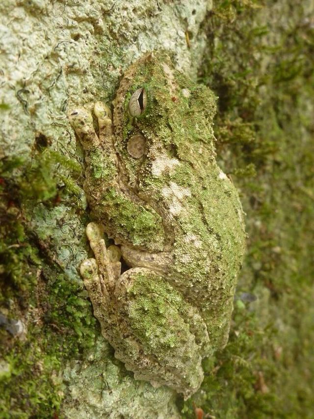 camouflage-parfait-grenouille
