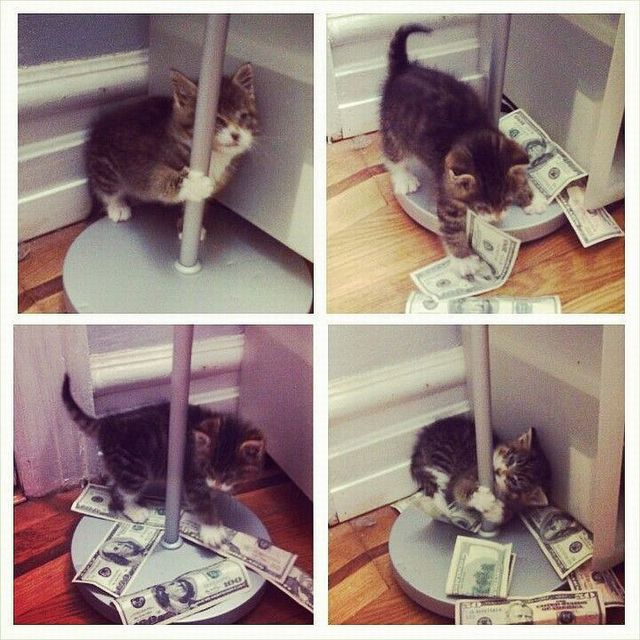 chaton-lapdance-billets