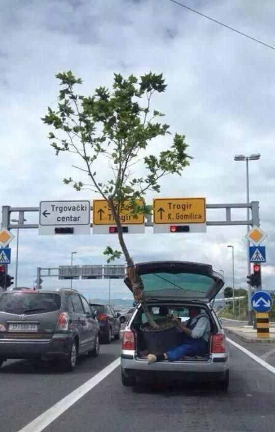 transport-arbre-vehicule-leger