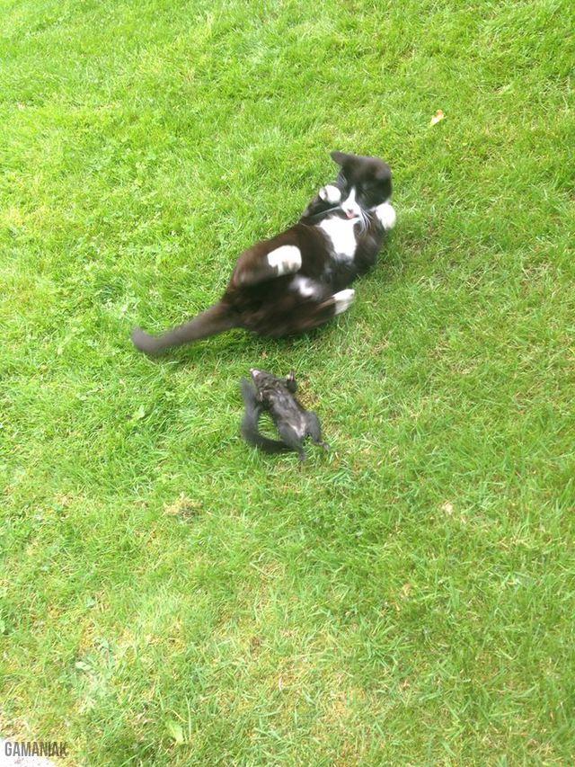 chat-moque-ecureuil-mort