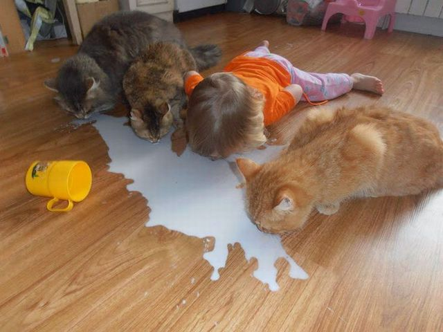 chats-bebe-boivent-lait