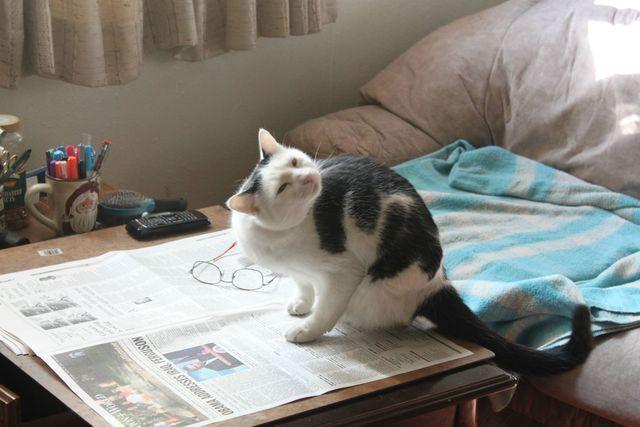 chat-qui-essaie-gratter-avec-patte-amputee