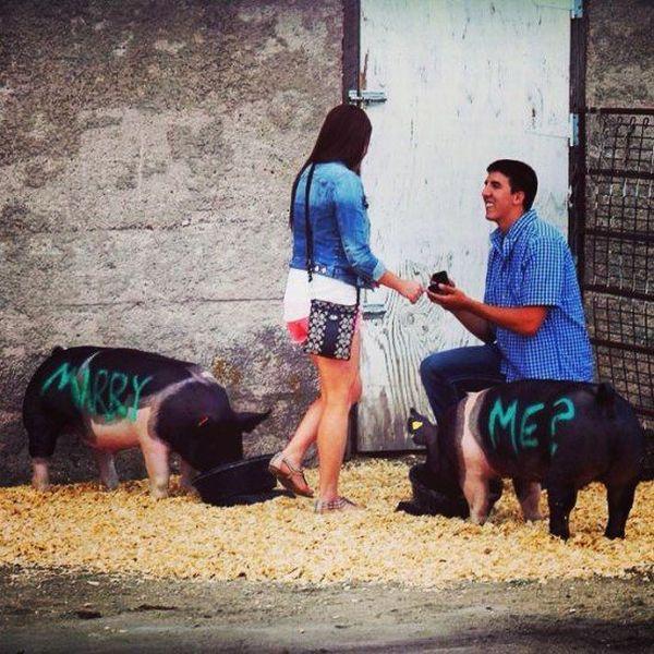 demande-mariage-cochonne