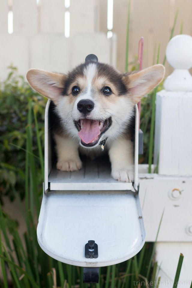 facteur-depose-chien-dans-boite-aux-lettres