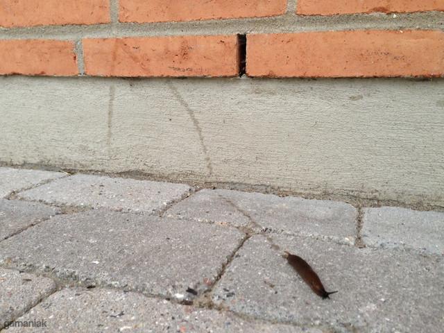 limace-qui-fait-parkour