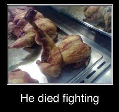poule-morte-combat