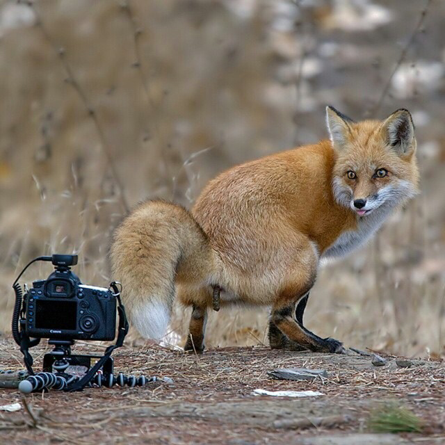 tiens-photographie-ca