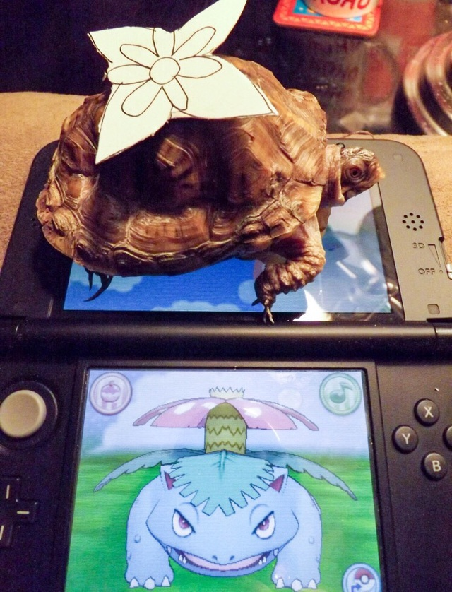 vous-avez-nouveau-pokemon-3d