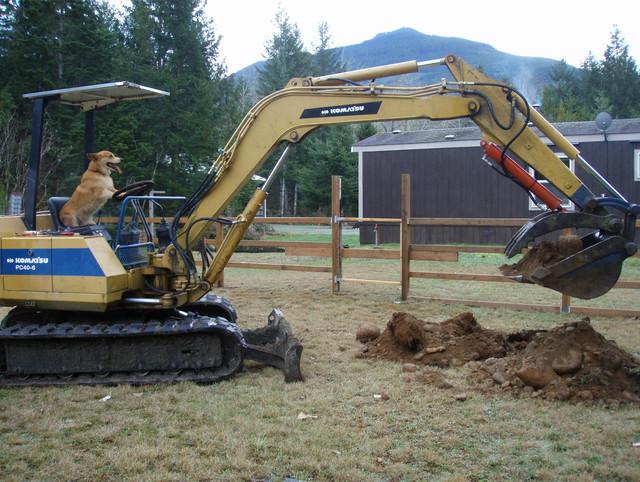 chien-encore-creuse-jardin
