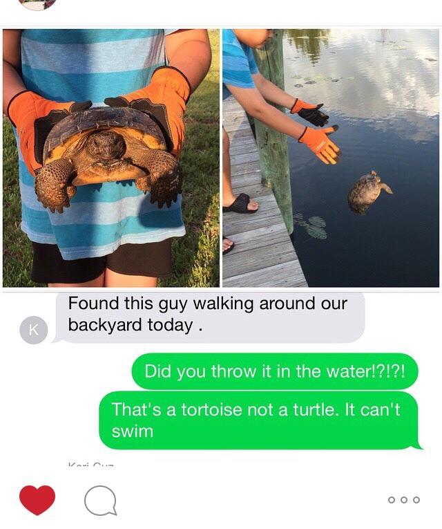 cetait-tortue-terrestre