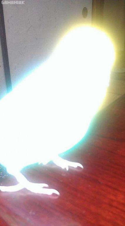 perroquet-evolue