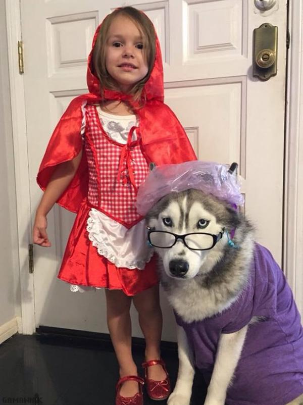 costume-halloween-petit-chaperon-rouge-husky