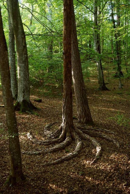 arbre-racines-spirale