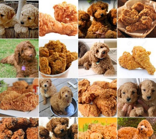 dog-nugget