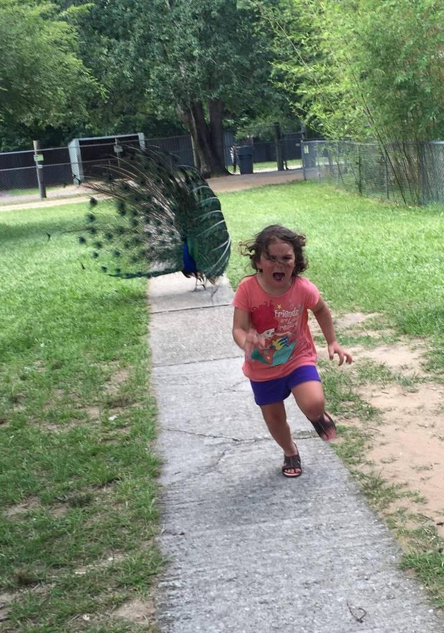 enfant-peur-paon