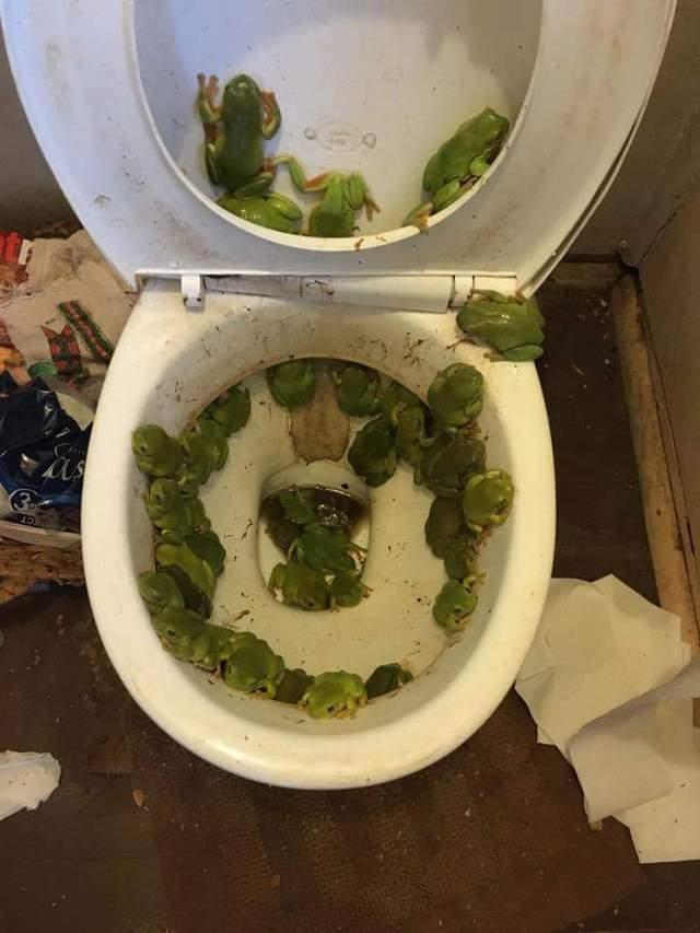 toilettes-grenouilles-inondation
