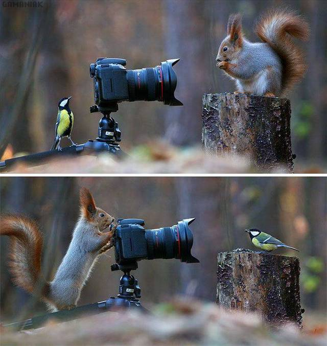 ecureuil-oiseau-photo