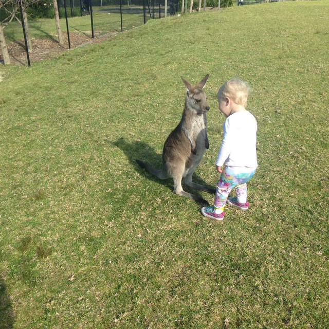 bebe-kangourou-vs-bebe-humain