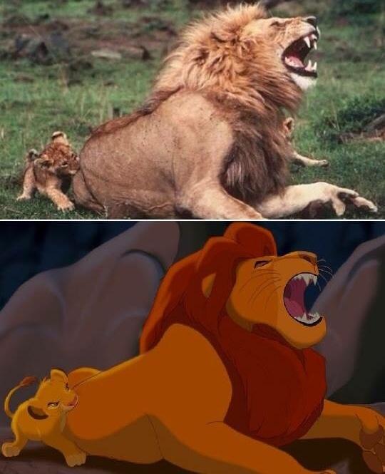 roi-lion-vrai