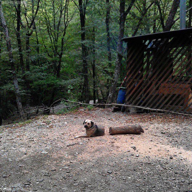 chien-tronc-arbre-confondus