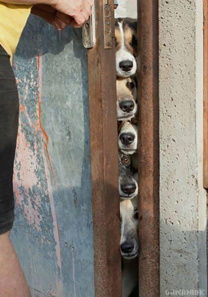 5-chiens-ouverture-porte