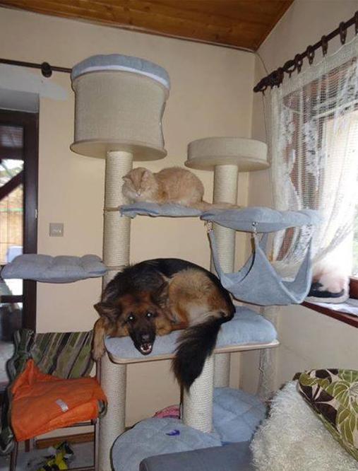 chien-passe-trop-temps-chat