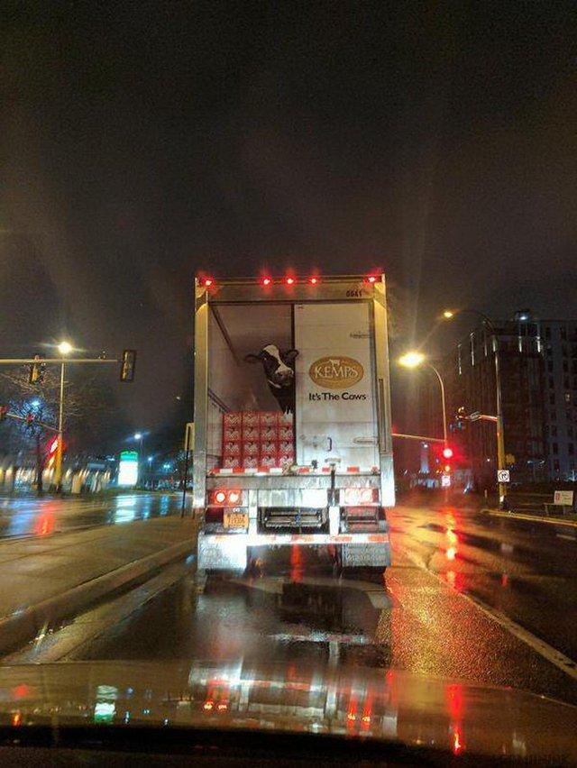 dessin-vache-arriere--camion