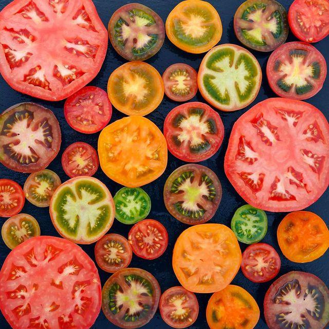 tomates-toutes-couleurs